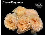 Cream fragrance